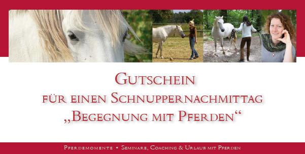 Verschenke eine Begegnung mit Pferden