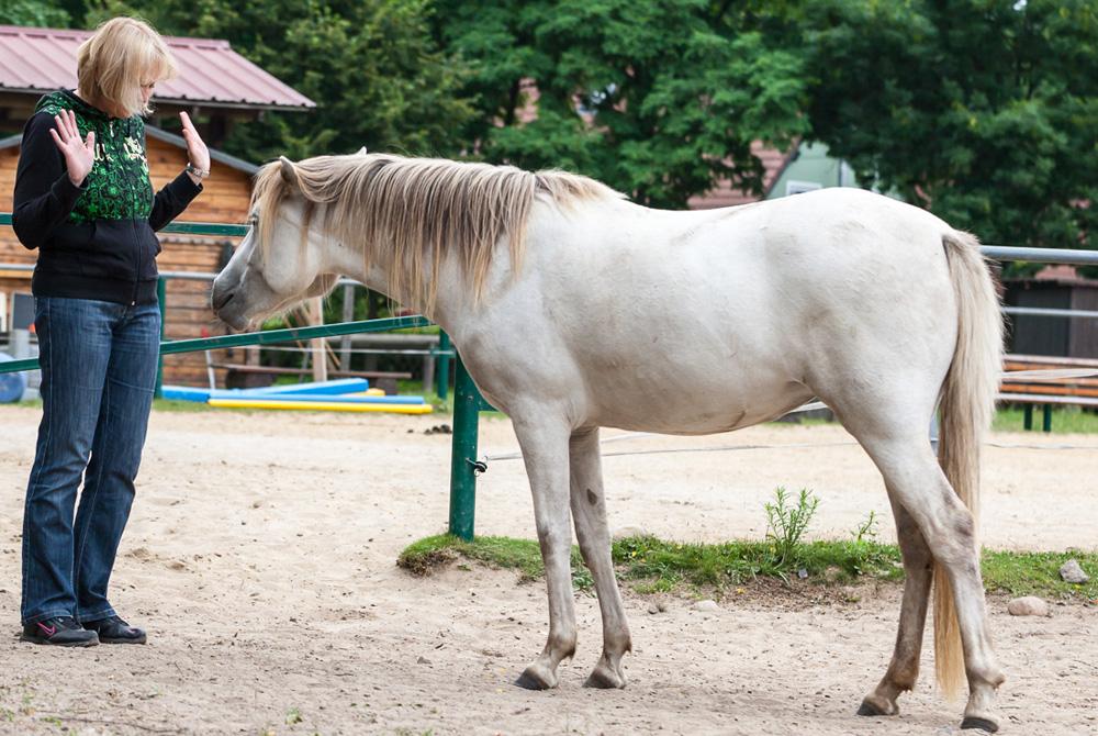 Nein sagen lernen - Pferde helfen dir, gesunde Grenzen zu entwickeln