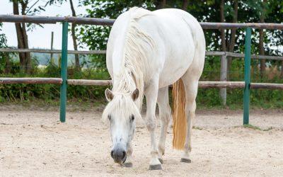 Eigentlich habe ich Angst vor Pferden