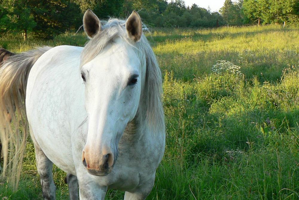 Pferde geben dir ehrliches Feedback, wie du nach außen wirkst
