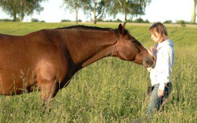 """""""Das ist mein Raum!"""" – wie Pferde uns auffordern, unsere eigenen Grenzen zu behaupten"""
