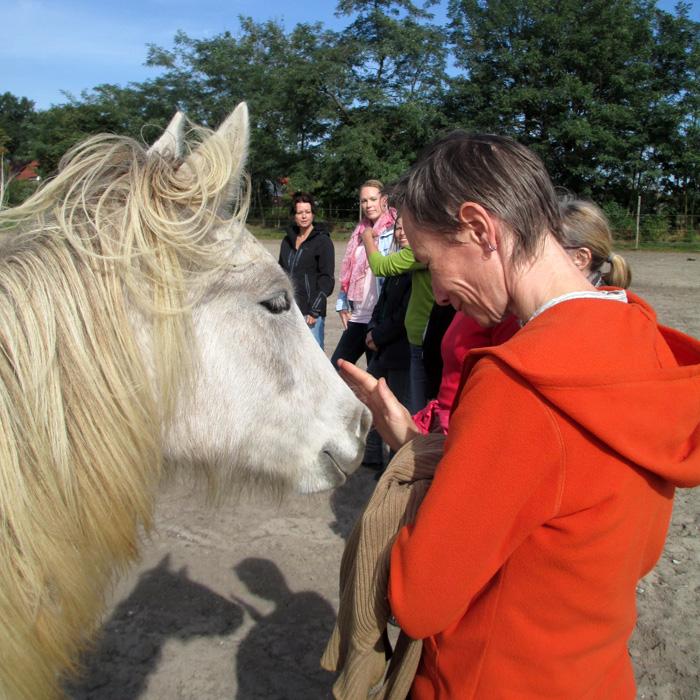 Seminare mit Pferden - lebendiges Lernen mit charmanten Co-Trainern