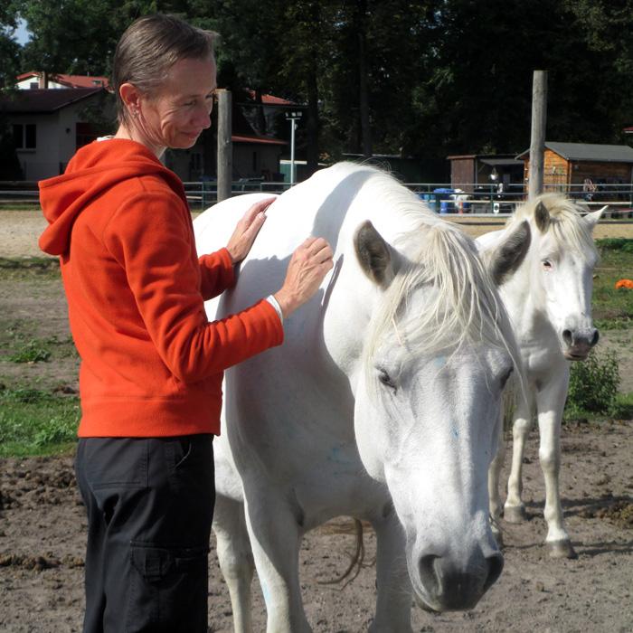 Deine Heldenreise mit Pferden - finde den nächsten Schritt zu dir selbst