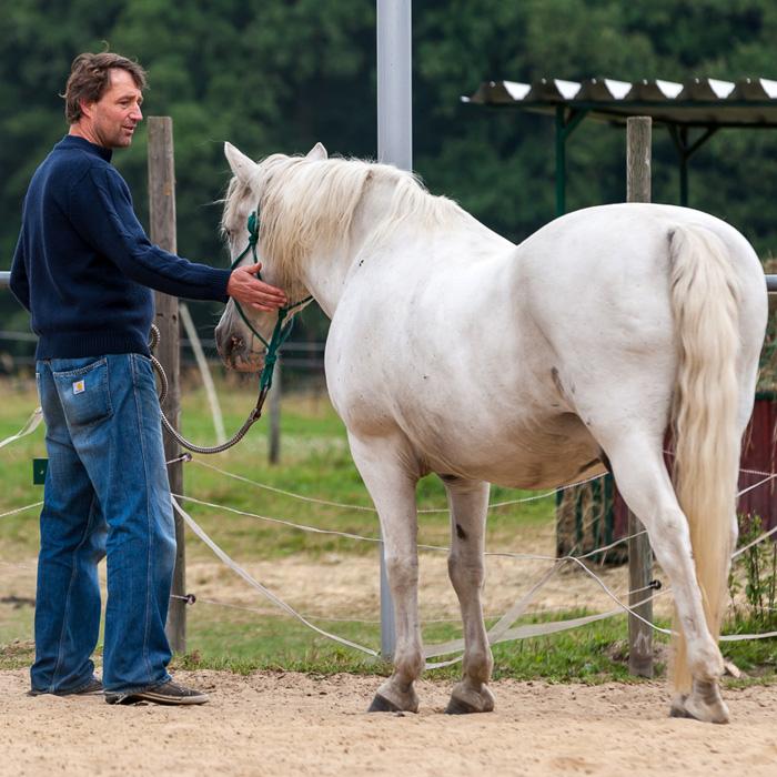Pferde testen Führungskompetenz und geben ehrliches Feedback