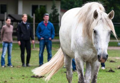 Firmentraining und Events mit Pferden