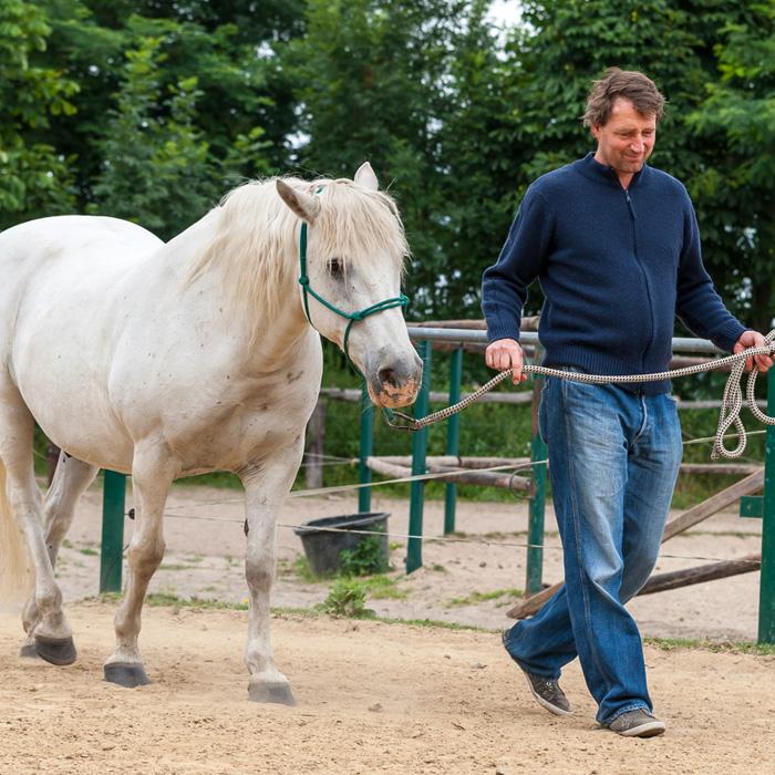 Führen lernen mit Pferden