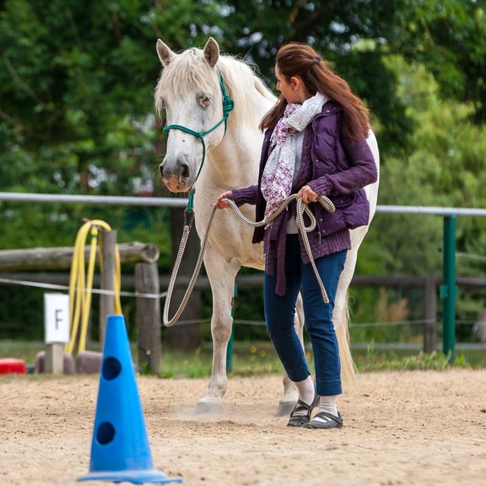 Pferde zeigen dir, wie klar und überzeugend du bist