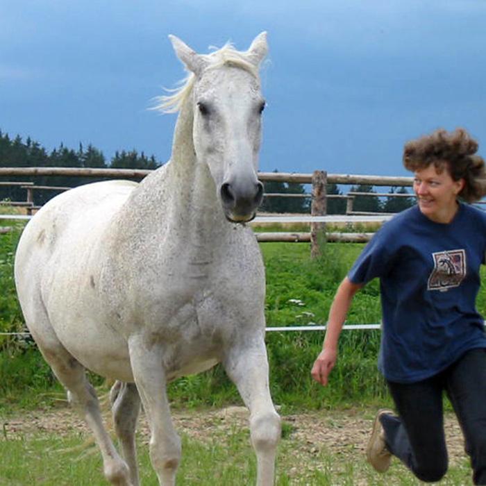 Aktiviere im pferdegestützten Coaching deine Kraft und Lebensfreude