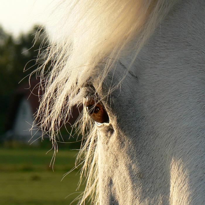 Abenteuer Ich - erkenne dich selbst im Spiegel der Pferde