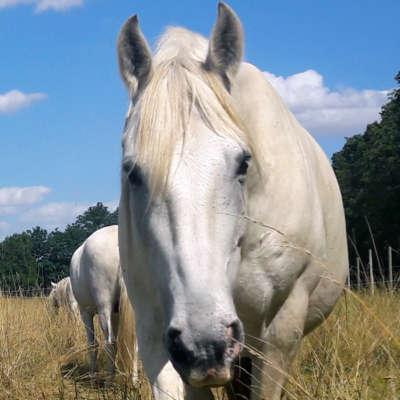 Schnupperkurs Begegnung mit Pferden - erlebe Pferde als Persönlichkeitstrainer