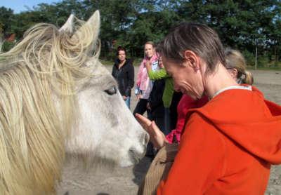 Pferdegestützte Seminare in Kleingruppen