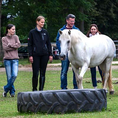 Teamevent mit Pferden - ein besonderes Erlebnis für Teamgeist und Motivation