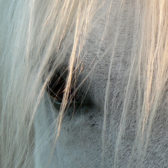 Pferdegestütztes Coaching bringt Klarheit und Selbstvertrauen