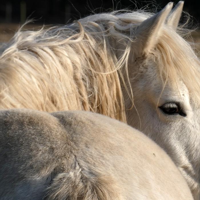 Intensiver Coaching-Tag mit Pferden für dein ganz persönliches Thema
