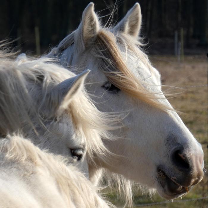 3-Monats-Coaching - deine Transformation an der Seite der Pferde
