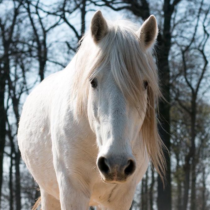 Pferde als Spiegel für mehr Selbsterkenntnis und innere Kraft
