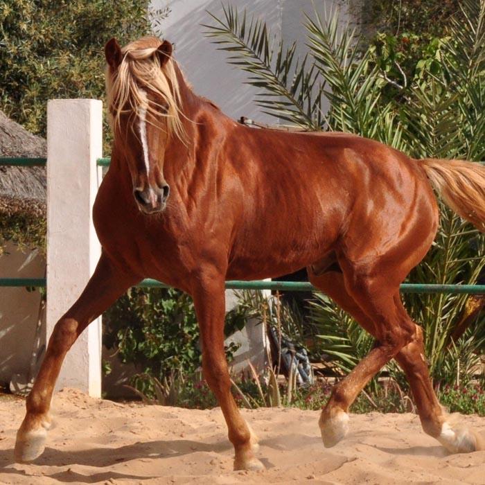 Pferde bilden eine Brücke zwischen Mensch und Natur