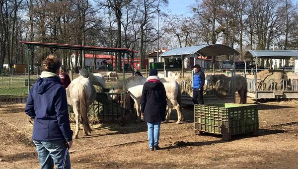 Seminar mit Pferden