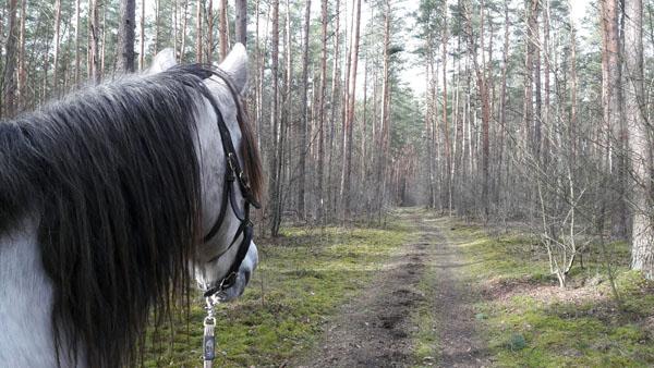 Auszeit beim Pferd
